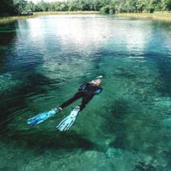swim with the manatees